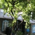 срочно продается дом в с. Красноярское, фотография 5