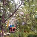 сад в Кыштыме на острове Бычном, фотография 4