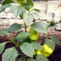 сад в Кыштыме на острове Бычном, фотография 5