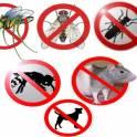 блохи крысы тараканы муравьи клопы