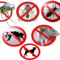 крысы тараканы муравьи клопы блохи