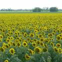 Продажа прибыльного сельхозпредприятия в Южном фо., фотография 1