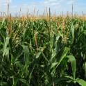Продажа прибыльного сельхозпредприятия в Южном фо., фотография 2