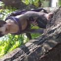 Канадский сфинкс