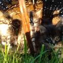 котята прикольные