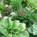 Ландшафт, озеленение - создание нового сада