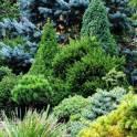 Садовые растения для вашего сада!