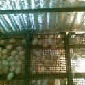 бытовой инкубатор для яиц