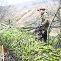 Спилить, удалить деревья, удалить пни в Электростали
