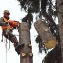 Спилить, удалить деревья, удалить пни в Химках