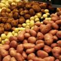 продам семянной картофель и семянной