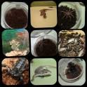 Пауки,скорпионы и многое другое
