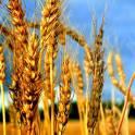 Комбикорма, зерно, товары для животных