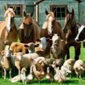 Куплю любой вид скота