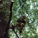 Спилить, удалить, обрезать деревья в Реутове