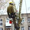 Удалить спилить опасные деревья в Реутове