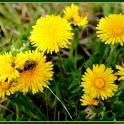 Пчелопакеты среднерусской породы пчел. Весна 2016г