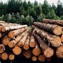 Продам лес на корню