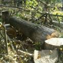 С пил деревьев любой сложности, дрова