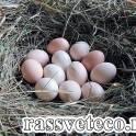 Реализуем яйцо куриное домашнее экологическое