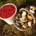 Продам ягоду, грибы, чагу оптом