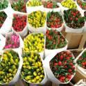тюльпаны  на 6 7 8  марта