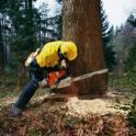 валка разборка сложных деревьев по частям