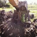 Корчевание деревьев и пней