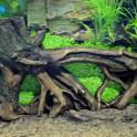 Корни дерева, для ландшафтного дизайна