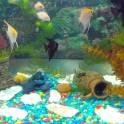 Продам аквареумы, полностью оформлены, рыбки, растения, ракушки ампулярии