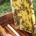 Продаю Натуральный мёд.