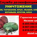 уничтожение клопов и тараканов в Голицино