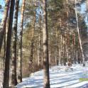 Земля Чемала, Республика Алтай,Чемальский район., фотография 2