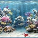 Чистка аквариумов в Симферополе, Севастополе, Евпатория, Керчь, по Крыму
