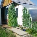 Продаю сад в Миассе в к/с