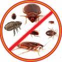 Уничтожаем насекомых. Тараканов,клопов,муравьев