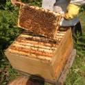 Пчелосемьи