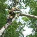 Кронирование деревьев в Чехове