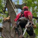 Кронирование деревьев в Троицке