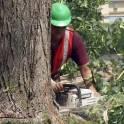 Спил, удаление деревьев профессионалами в Бронницах