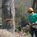 Спиливание, удаление, вырубка, обрезка деревьев в Троицке
