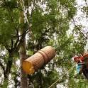 Удаление, спиливание деревьев бензопилами в Троицке
