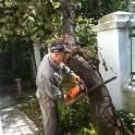 Услуги по удалению сложных деревьев в Климовске