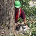 Услуги по удалению сложных деревьев в Ступино