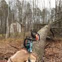 спиливание опасных деревьев