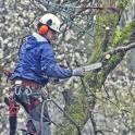 Услуги по удалению сложных деревьев в Чехове
