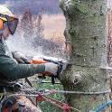 Услуги по удалению сложных деревьев в Троицке