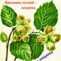 Продаются саженцы орешника лесного.
