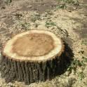 Выкорчевка деревьев и пней.Уборка участков.