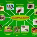 Травим тараканов,клопов,грызунов